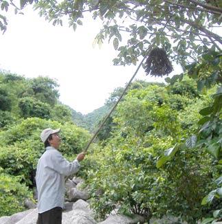 http://www.baophuyen.com.vn/Portals/0/2007/07/09-10/070709-gc2.jpg