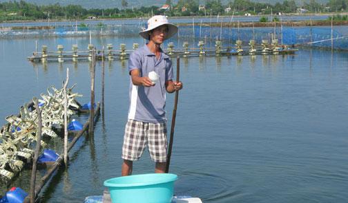 Huyện Tuy An: Hơn 60 ha tôm nuôi bị bệnh và mất trắng