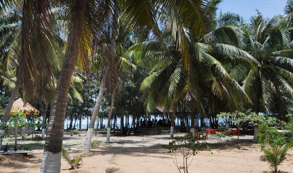 Không gian rợp mát bóng dừa xanh