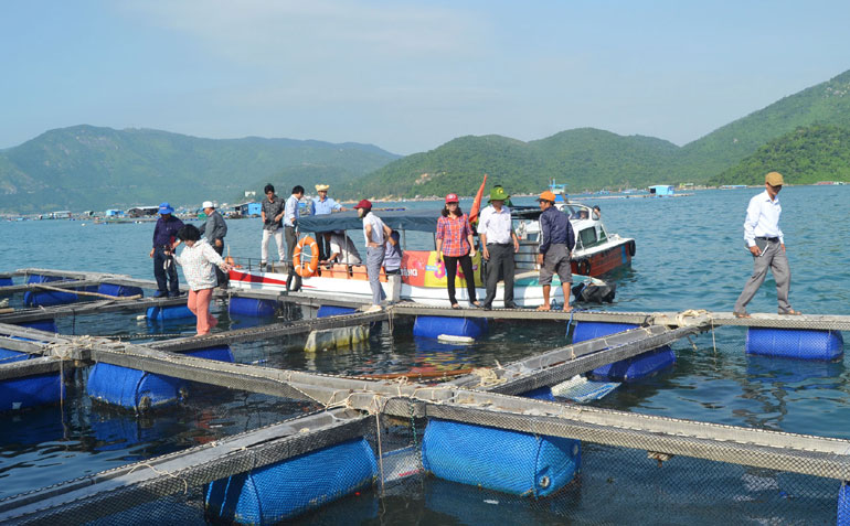 Đoàn giám sát của HĐND tỉnh đi khảo sát thực tế tình hình nuôi thủy sản tại Vũng Rô (huyện Đông Hòa) - Ảnh: ANH NGỌC