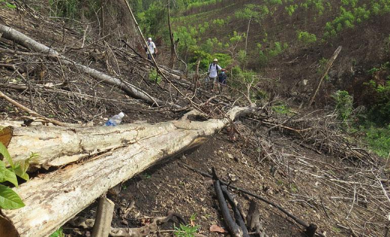 Phát hiện thêm nhiều diện tích rừng ở Sơn Hội bị chặt phá